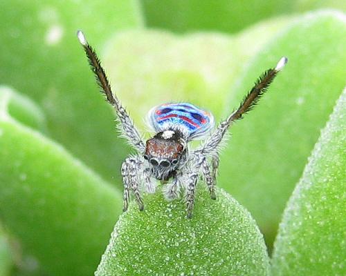 اجمل عنكبوت فى العالم Image014