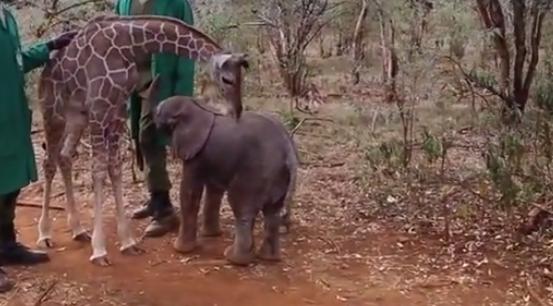 Desperate Baby Orphans Find Hope Through Their Unusual Friendship  ScreenShot5126