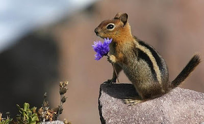 ~~Waiting for You~~ Squirrel-flower