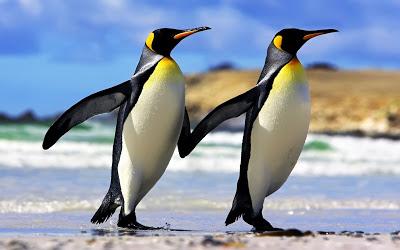 Una palabra una imagen... - Página 3 Emperor-penguins-couple-1920x1200-wallpaper-enamorados