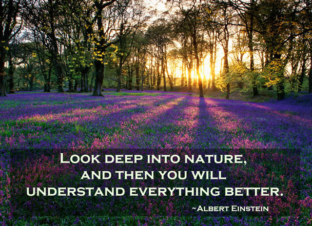 Walk in the Forest to Heal Oneself Albert-Einstein-Look-deep-into-nature-and-then-you-will-understand-everything-better