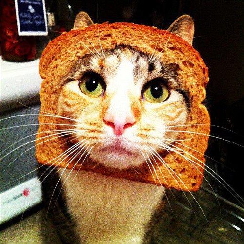 Vosotros sois más de planking o de owling? Cat-breading-2