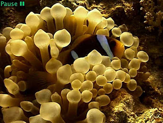 موسوعة شاملة عن المحميات الطبيعية - حصريا على منتدى واحة الإسلام Fish
