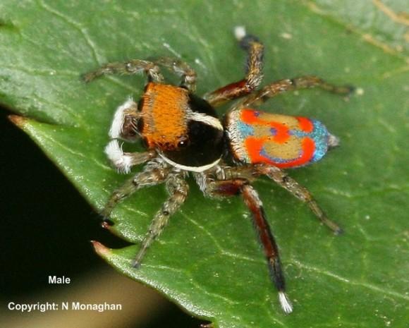 اجمل عنكبوت فى العالم Image024-580x465