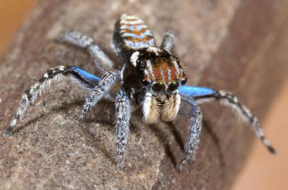 اجمل عنكبوت فى العالم Image049-580x383