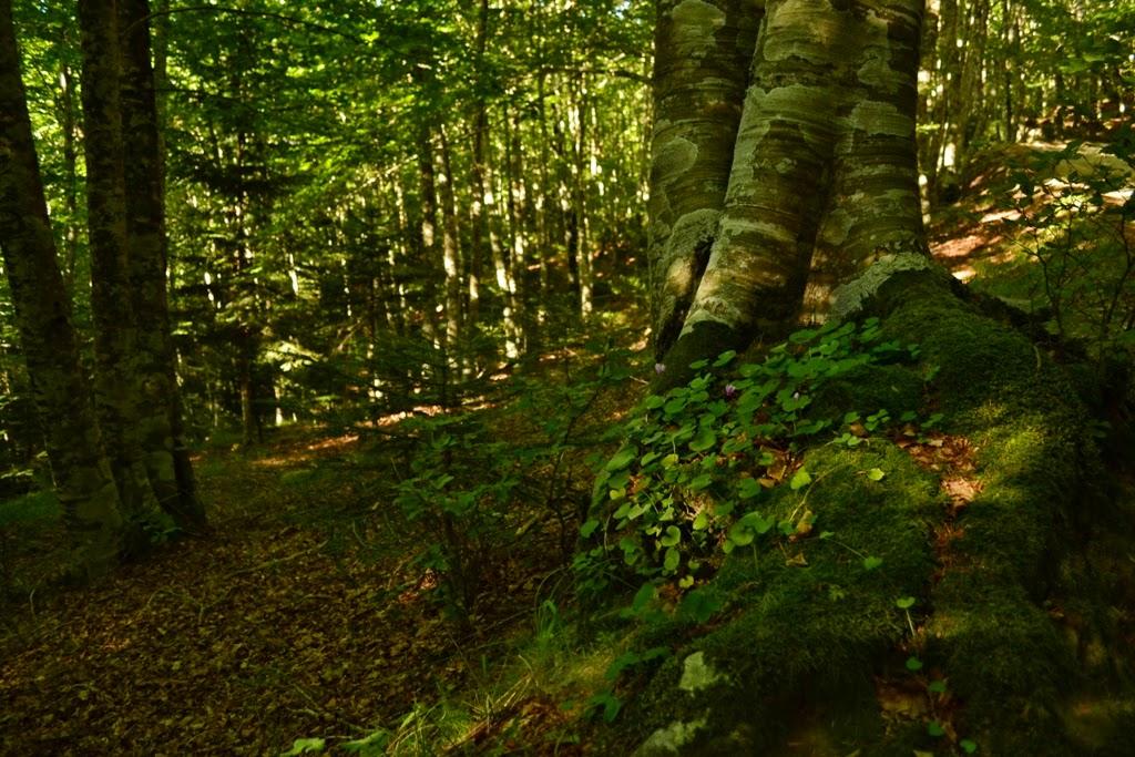 I segreti del bosco DSC_0144