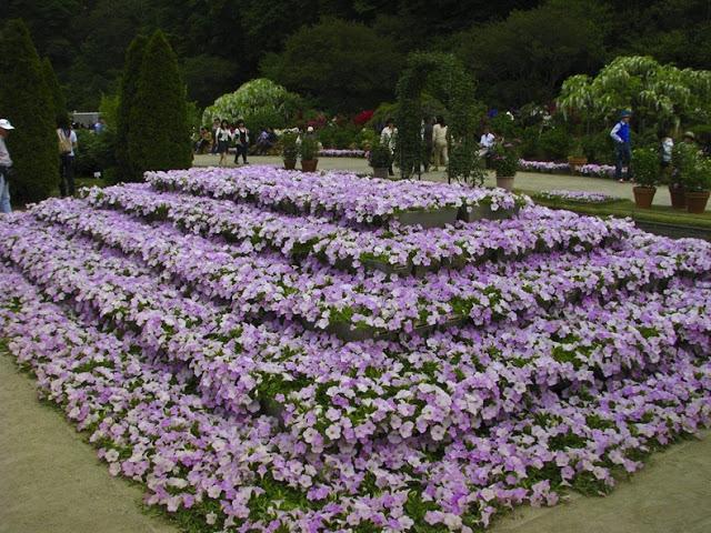 حديقة زهرة الحب في اليابان 8