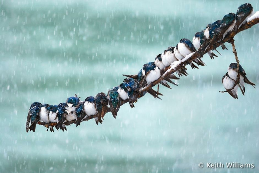 اجمل صور الطيور ل 2012 0_89291_c03737b1_orig