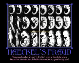 Evolution is a Lie - Intelligent Design is the Truth! Haeckel_Fakel