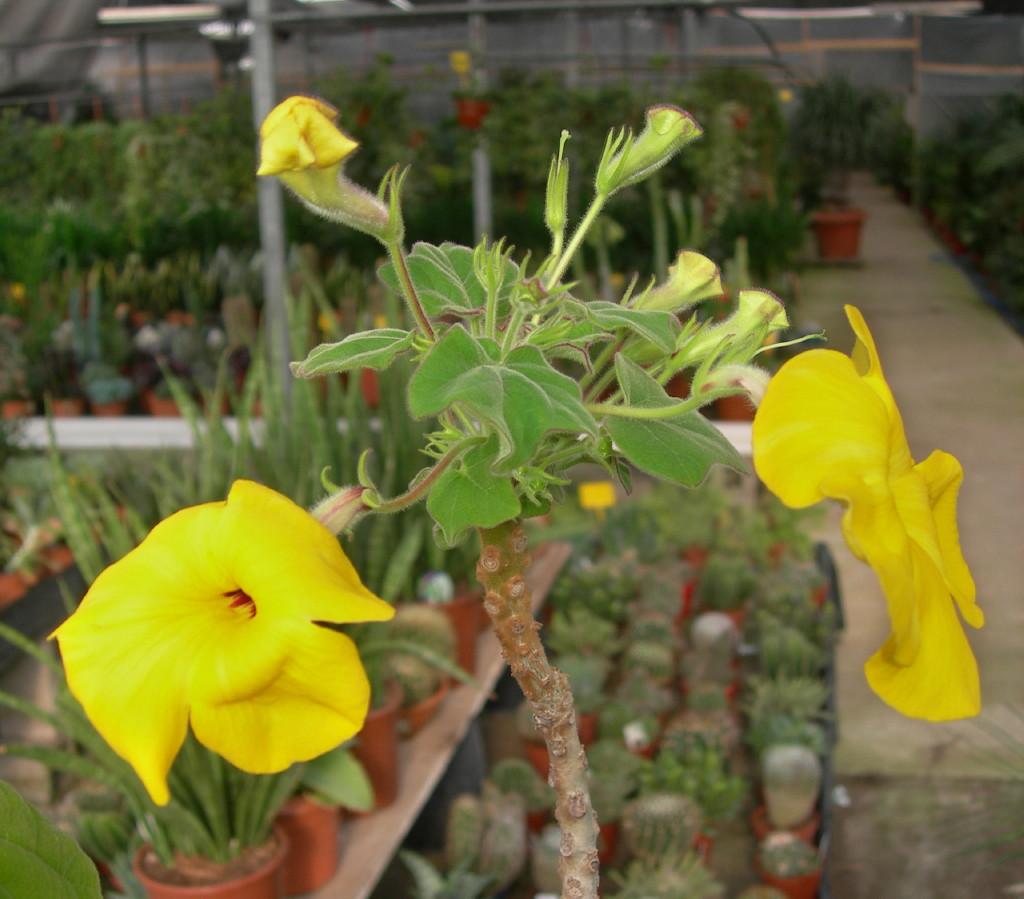 la plante de Martin 6 avril trouvée par Martine Uncarinagflor2_1