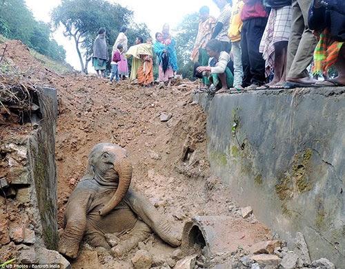 كيف تخرج فيل من حفرة Aa