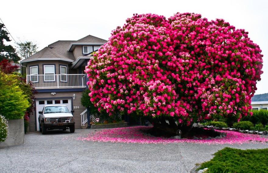 Il a créé l'arbre aux 40 fruits ! Belle collaboration avec notre Créateur ! 1