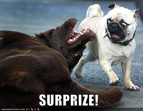 Imagem do dia - Página 3 Funny_dog_images