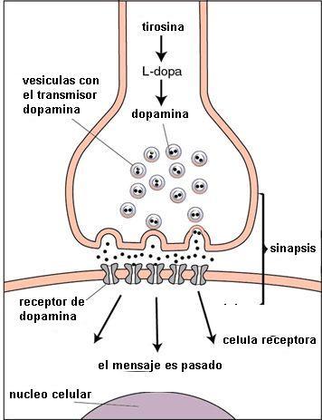 Bioquimica del Amol.l 0%2Bdopamina