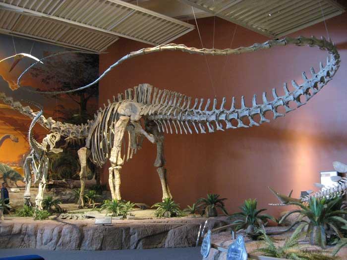 أي الحيوانات البرية كان الأضخم على مر الزمن؟!..  Seismosaurus_1