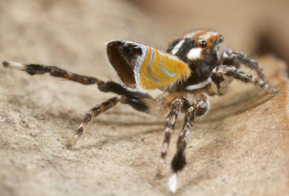 اجمل عنكبوت فى العالم Image012-580x393
