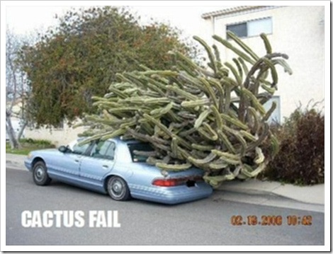 Funny photos!!!! Cactus_car_fail%255B2%255D