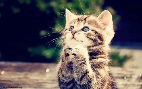 les chats sont des guérisseurs holistiques Photo-chat-mignon-67