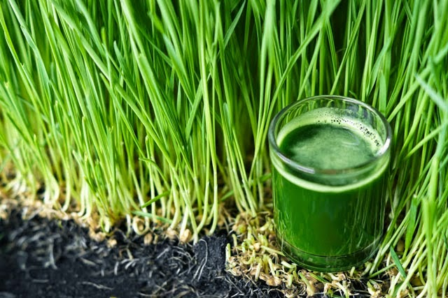 10 signs your body Is screaming at you for a detox  Fullbodybodydetoxjuice
