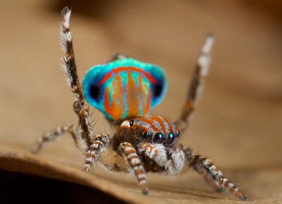 اجمل عنكبوت فى العالم Image043-580x420