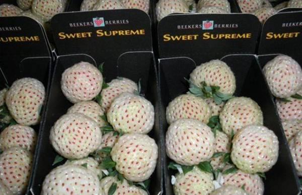 الأناناولة فاكهة جديدة بنكهة الأناناس والفراولة Image018-791461