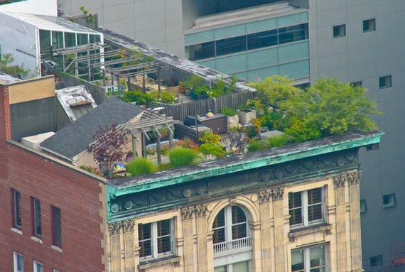 حدائق فوق الأبنية 35