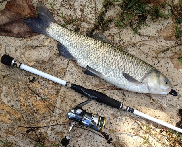 [SPIN] Unconventional Seven 10-18 Lb 13