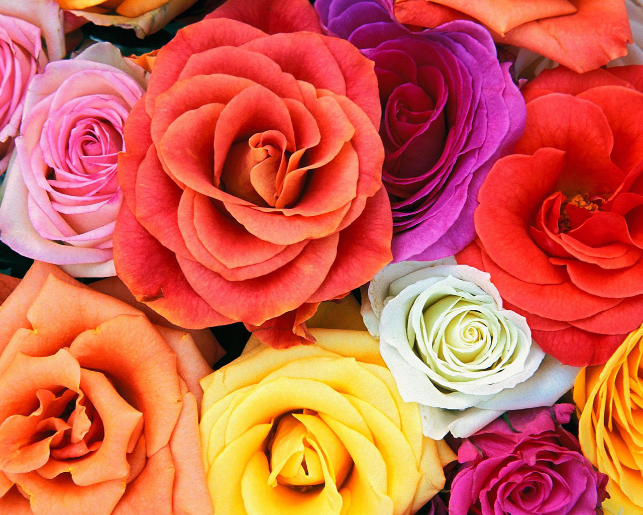 வால்பேப்பர்கள் ( flowers wallpapers ) - Page 5 _beautiful_flower_00015