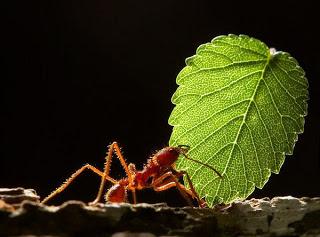 سبحان الله النمل لا يكذب  Txjzyj