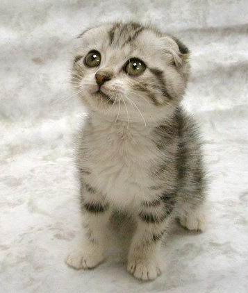 Really Cute Cats Cute_cat_cute_1-s357x422-47520