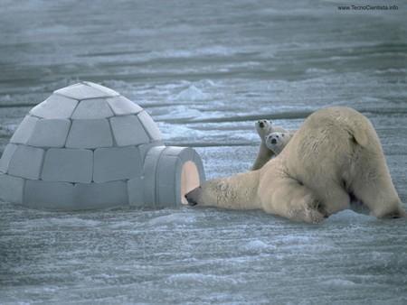 .. Y LLEGA EL INVIERNO... - Página 4 Urso_polar_iglu