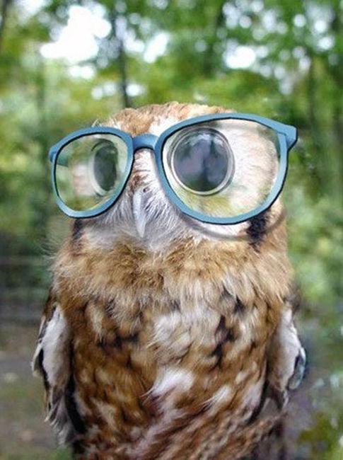 !! Madre mia !! - Página 2 Owl