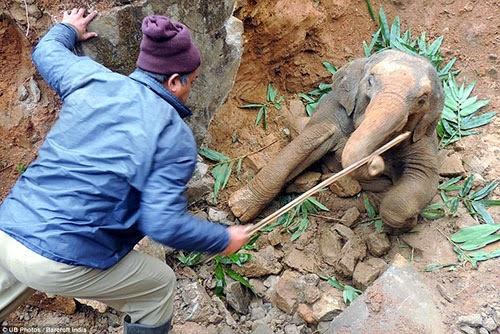 كيف تخرج فيل من حفرة A5