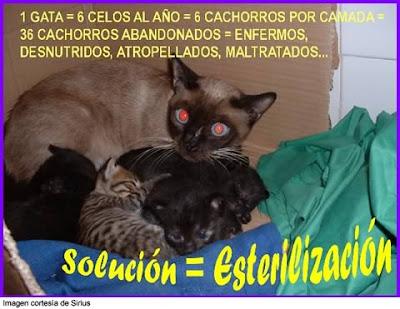 La impotencia de ver tantas camadas Cartel-esteriliza-gatos%5B1%5D