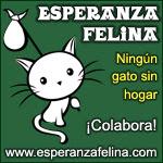 CESCA. La unión de Apa Sos Vitoria y Esperanza Felina por los gatos callejeros de Álava Banner_recomendados_zooplus