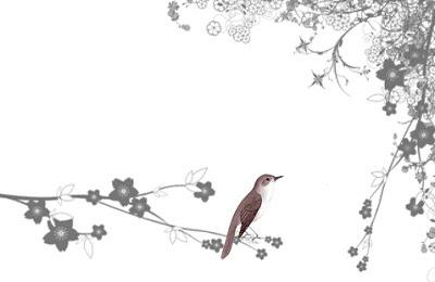 Nightingale Song Nightingale