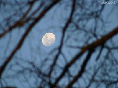 POEMAS SIDERALES ( Sol, Luna, Estrellas, Tierra, Naturaleza, Galaxias...) - Página 6 Lua2