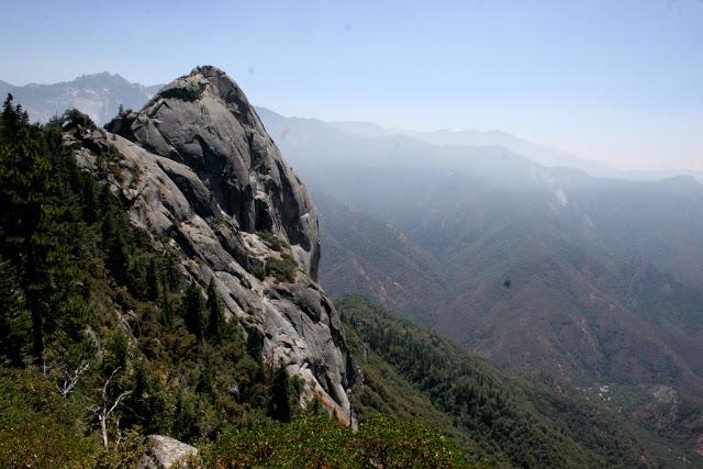 مخلوقات تعيش لأكثر من 3000عام Sequoia_02664635856aba_o
