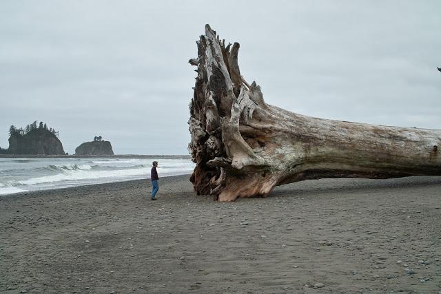 مخلوقات تعيش لأكثر من 3000عام Sequoia_4654476253_c4cdfdb65b_b