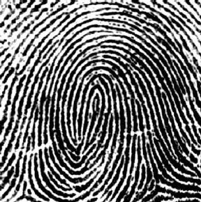 MY THEORY: When you have eliminated the impossible, whatever remains, however improbable, must be da troot CONTINUATION Fingerprints