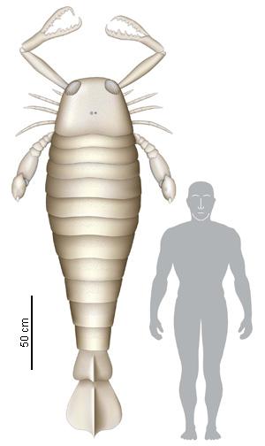 Algunos de los animales más grandes que han existido jamás Sea_scorpion_300_504