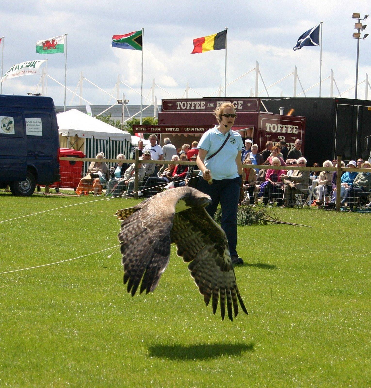 Comparação do tamanho de águias  com relação ao homem. Eagle2
