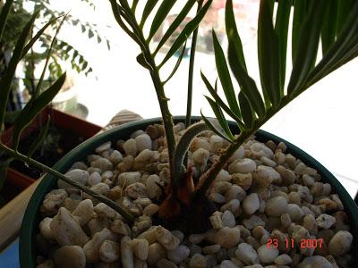 வண்ண வண்ண பூக்கள் DSC09048