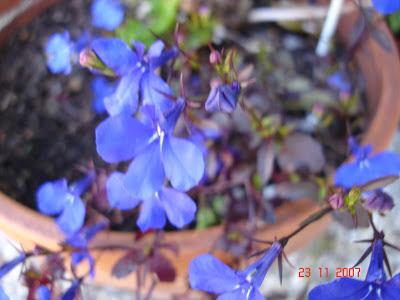 வண்ண வண்ண பூக்கள் DSC09062
