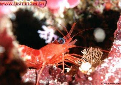 Οδηγίες για αγορά θαλασσινών %CE%B3%CE%B1%CF%81%CE%AF%CE%B4%CE%B1