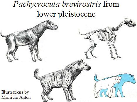 ~~Prehistoria~~ El marco ecológico. Pachycrocuta