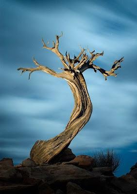 أجمل وأغرب الأشجار إطلاقا Amazing-trees-24