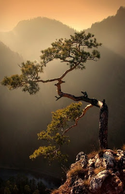 أجمل وأغرب الأشجار إطلاقا Amazing-trees-22