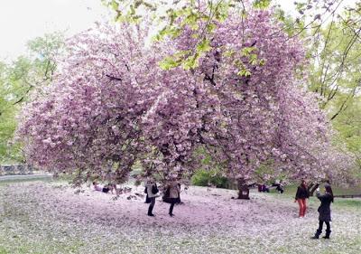 أجمل وأغرب الأشجار إطلاقا Amazing-trees-16