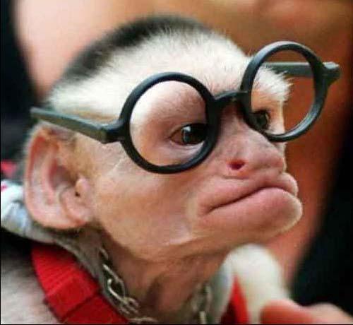 Din nou despre EMDrive - Pagina 2 Funny-monkey-pictures